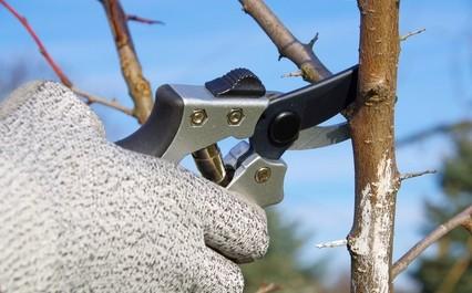 Gode råd ved beskæring af træer og buske